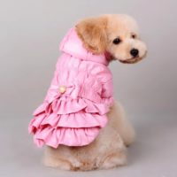 new design pet clothes coat